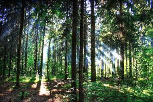 отдых в лесу на майские