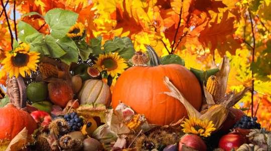 Что нужно сделать осенью?