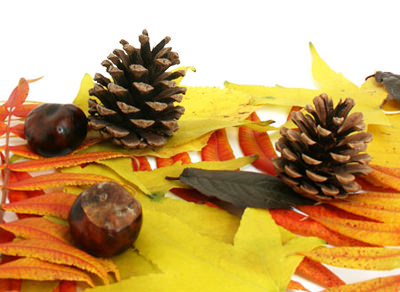 шишки и каштаны осенью
