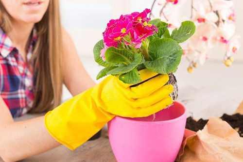 пересаживание комнатных цветов