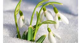 Что нужно сделать весной?