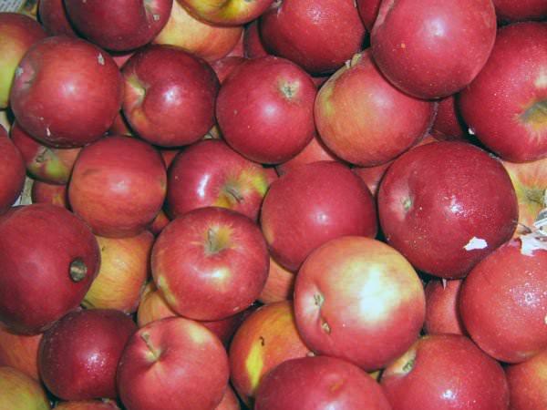 яблоки для правильного питания